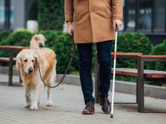 Der Blindenhund und was man über ihn wissen sollte
