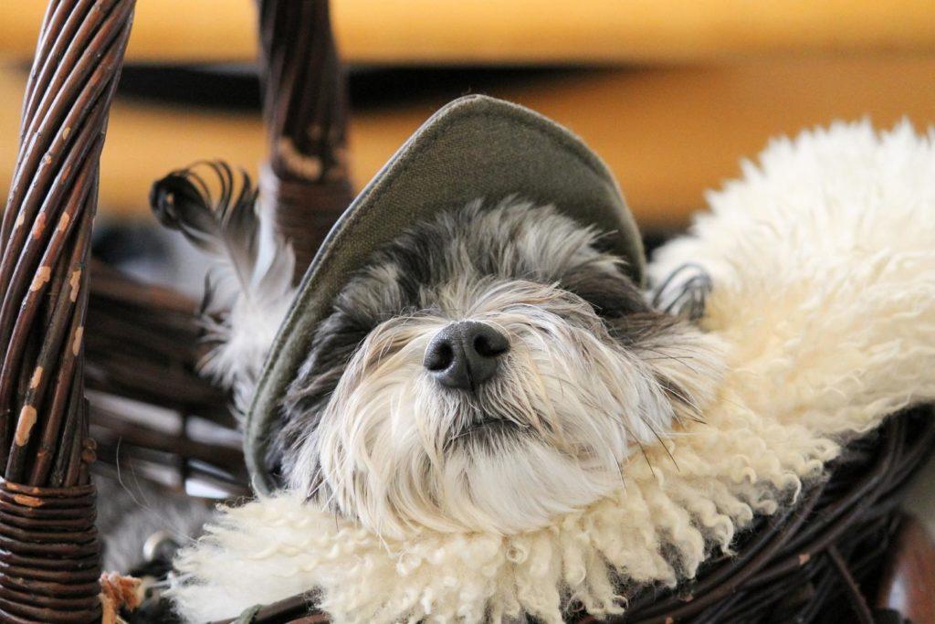 Hund in einem Hundekorb