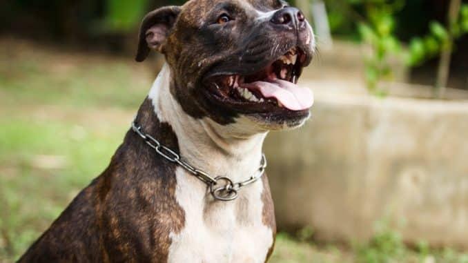 Hundehaftpflicht für Listenhunde