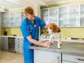 Lungenwürmer beim Hund