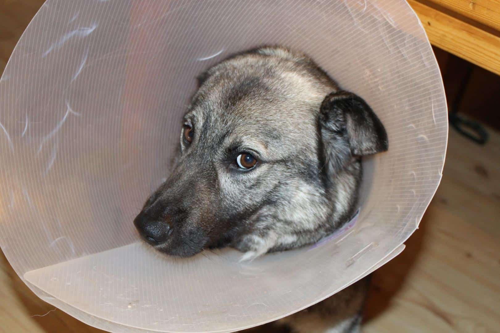 Hund wurde kastriert