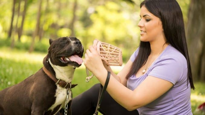 Maulkorb für den Hund
