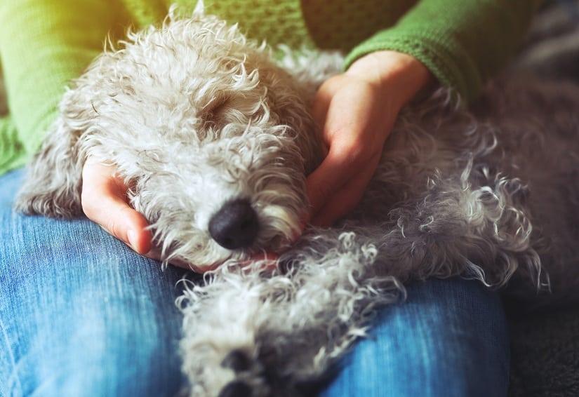 Basenpulver für Hunde: wann ist die Anwendung nötig? Das erfahren Sie jetzt.