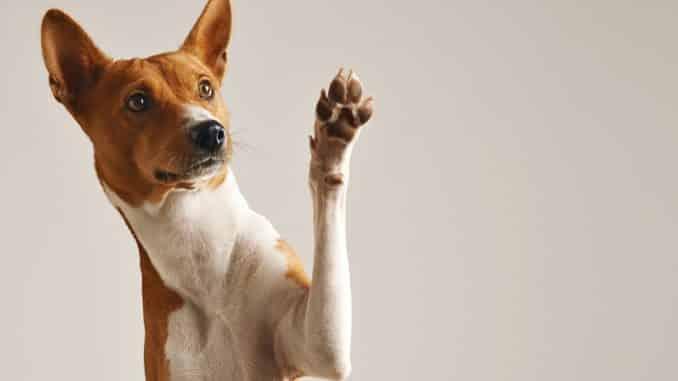 Pfotenschutz für den Hund