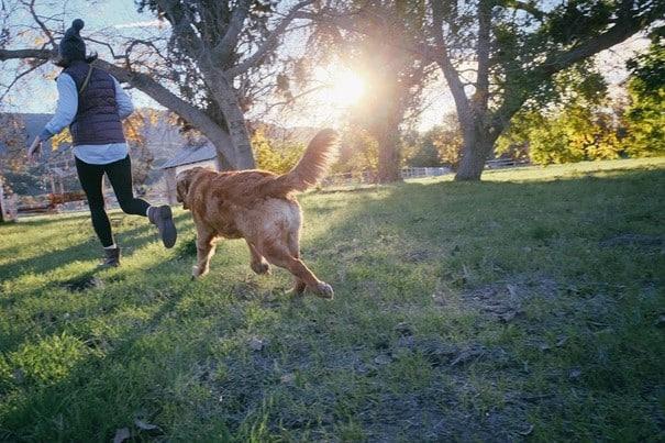 Gemeinsame (sportliche) Aktivitäten halten nicht nur fit, sondern schaffen auch Vertrauen und stärken die Hund-Mensch-Bindung.