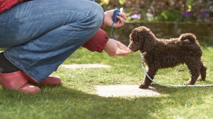 Clicker für den Hund