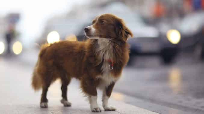 Hunde im urbanen Ambiente