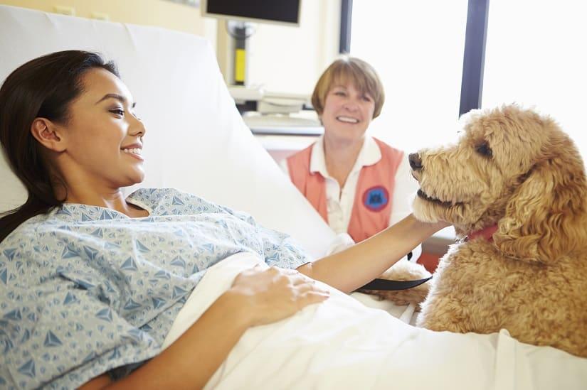 Therapiehund im Einsatz im Krankenhaus