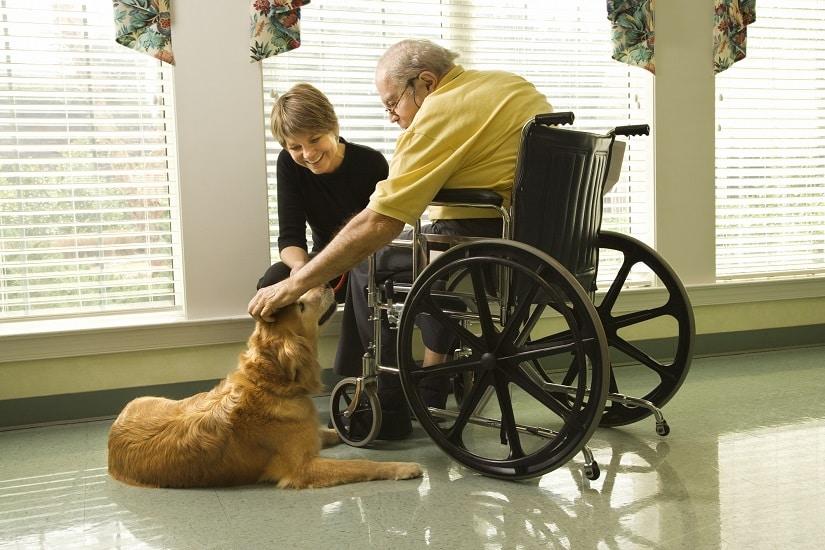 Therapiehund mit Mann im Rollstuhl