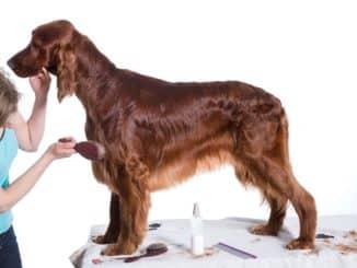Langhaarbürste für Hunde